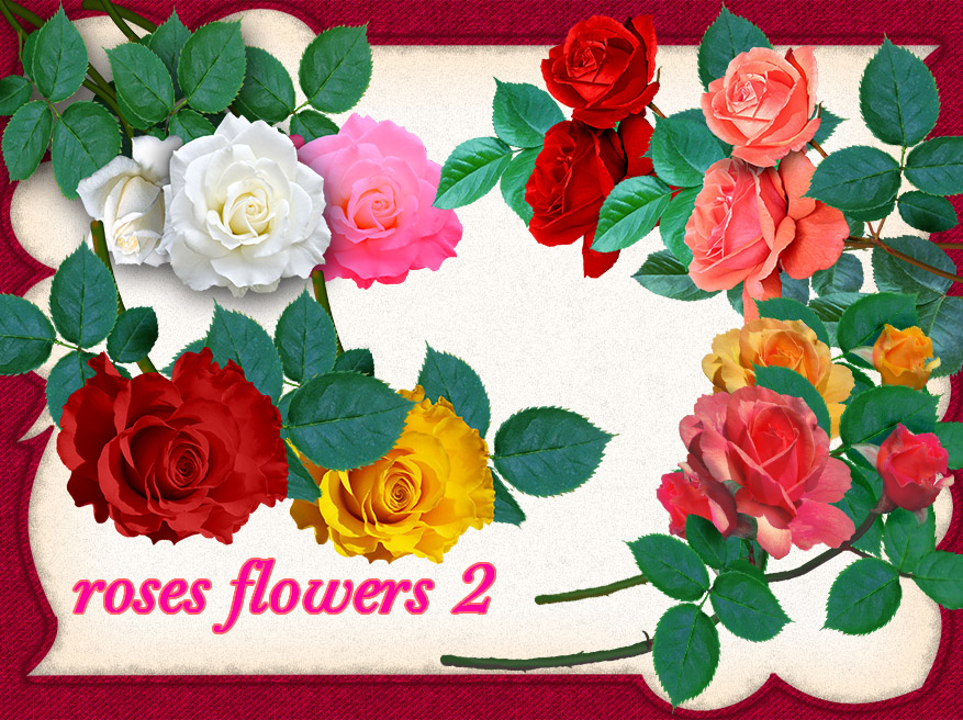 aA roses-2 by roula33