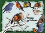 Winter With Birds