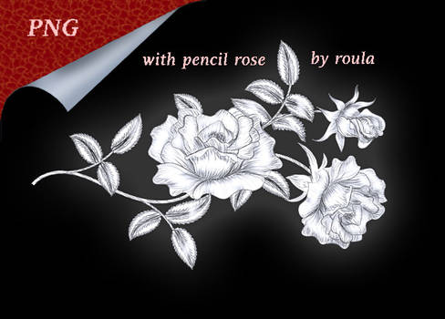 With Pencil Rose