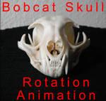 Bobcat Skull Rotation Animation