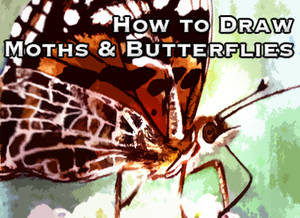 How to Draw Moths and Bflys
