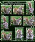 Squirrel Zip Pack Hermione75