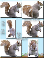 Set of Six Squirrel tubes Zip by WDWParksGal-Stock