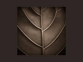 a leaf wallpaper by yuushi01