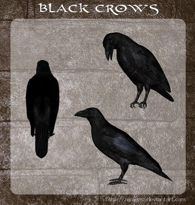 3D Black Crows