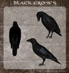 3D Black Crows