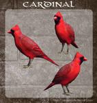3D Cardinal