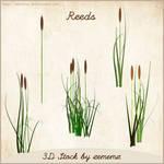 3D Reeds