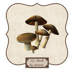 3D Mushrooms