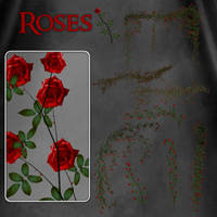 Roses by zememz