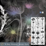 'X-Ray Flowers' Brush Pack