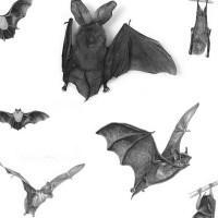 bat brushes by wix