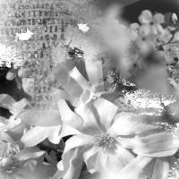 lothlorien by wix