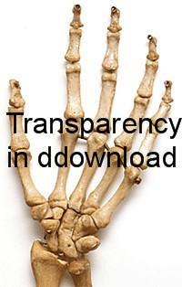 hand bones by BrokenFeline-Stock
