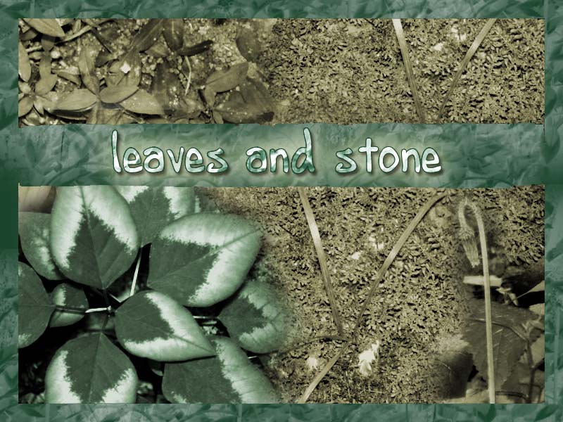 Leaves and Stone