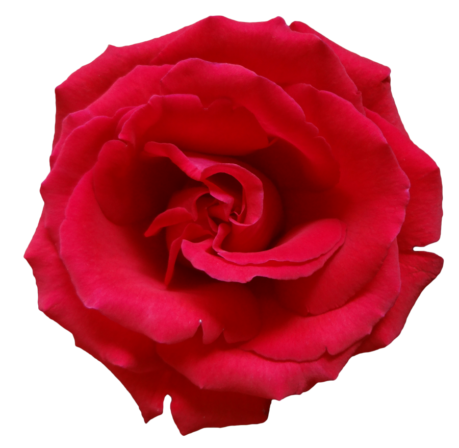 Red Rose PNG 1 by MysticEmma on DeviantArt for Red Led Light Texture  174mzq