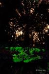 Bioluminescent Shrooms