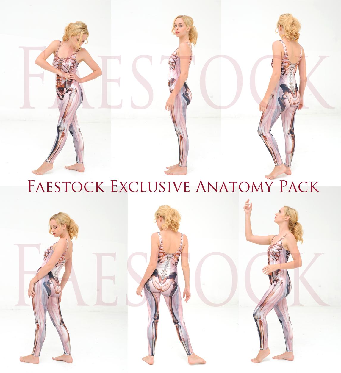 Faestock Exclusive Anatomy Pack