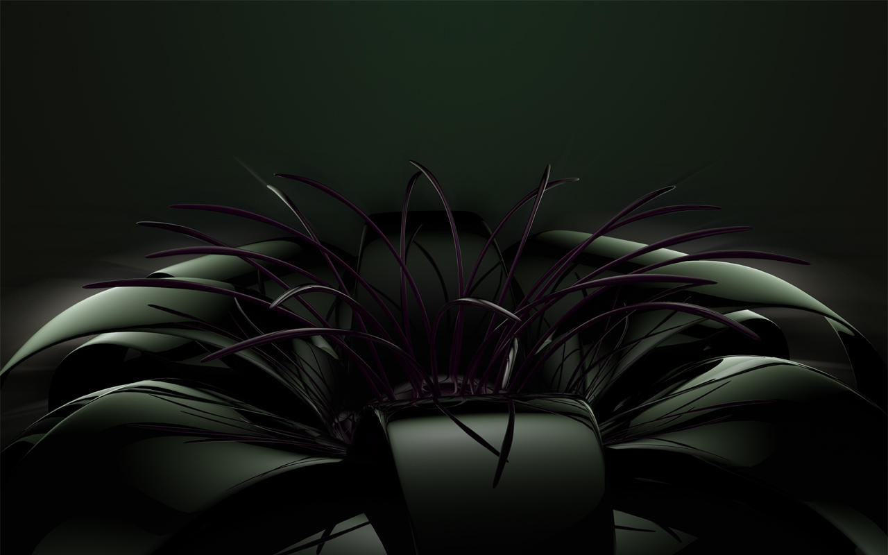 black flower with soft light by xylomon on DeviantArt