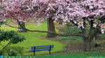 Spring Theme 2013 Windows 7  8 by Adyss88