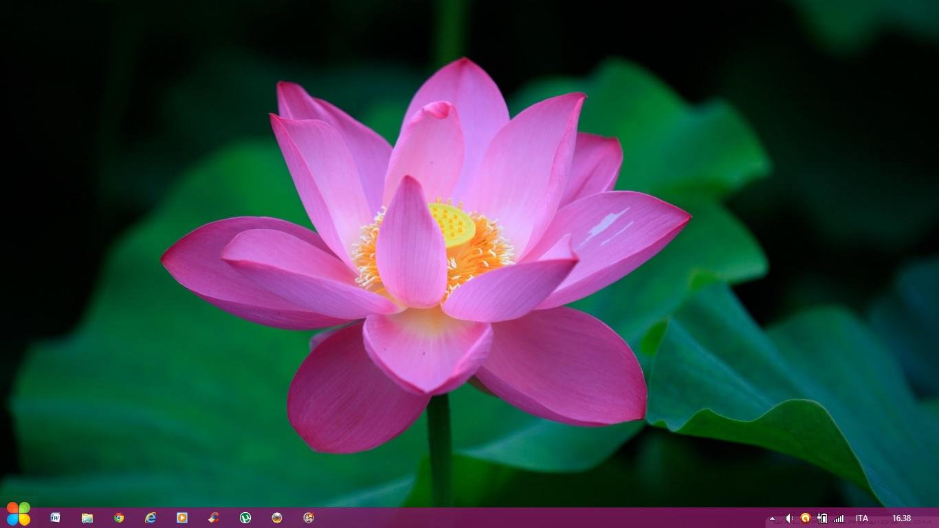 Flower Theme Windows 8 by Adyss88 by Andrei-Azanfirei