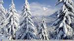 Winter Theme Windows 8 by Adyss88
