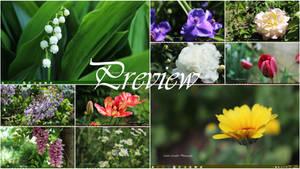 The beauty of flowers Theme Windows 8,8.1,10