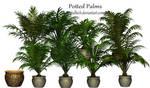 Potted  Palms PSD