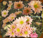 pink flowers 5 PNG  by starscoldnight