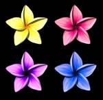 Plumeria Flower Model