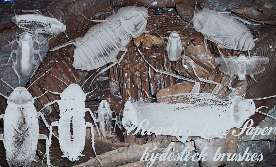 Roaches Love Paper by hydestock