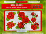 Pack Red Roses