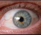 Bewegliches Auge