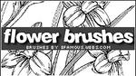 Brushes 01