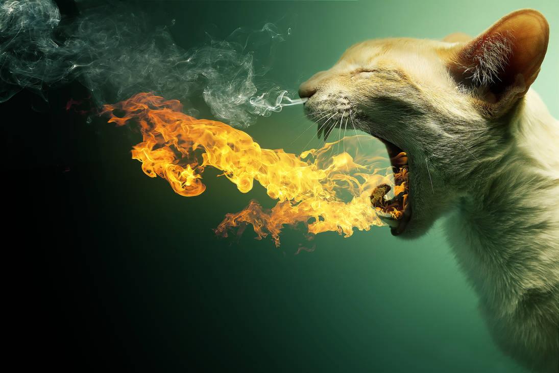 Flaming Cat + PSD by PSHoudini