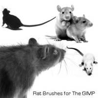 Rat Brushes