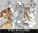 10 Tiger Drawing PNGs