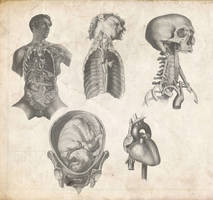 Old Anatomy Pack by Tobi-Wan