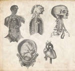 Old Anatomy Pack