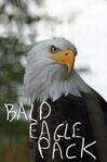 Bald Eagle Pack by asaph70