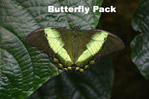 Butterfly Pack by asaph70
