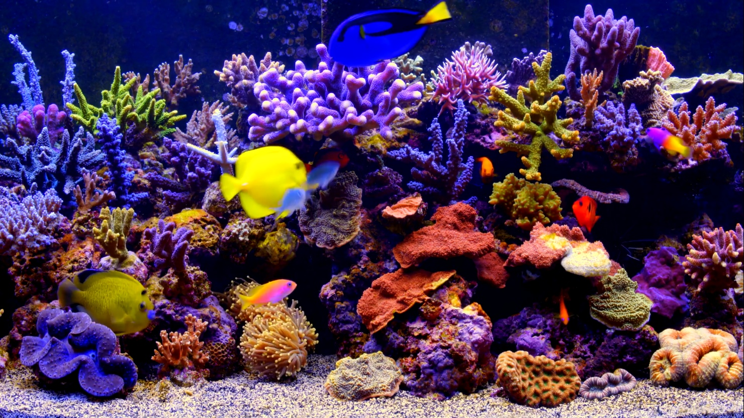 Aquarium-Live-Wallpaper by SmithJerry