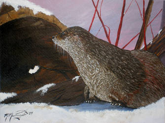 River Otter Seneca Park zoo by kdrmickey