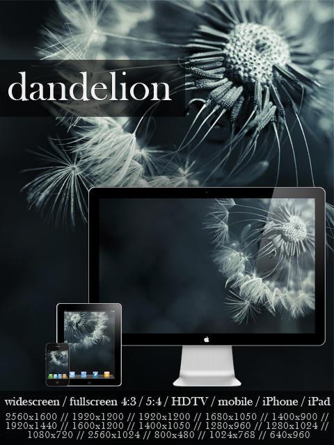 dandelion by snipes2