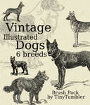Vintage Illust. Dogs Brushpack