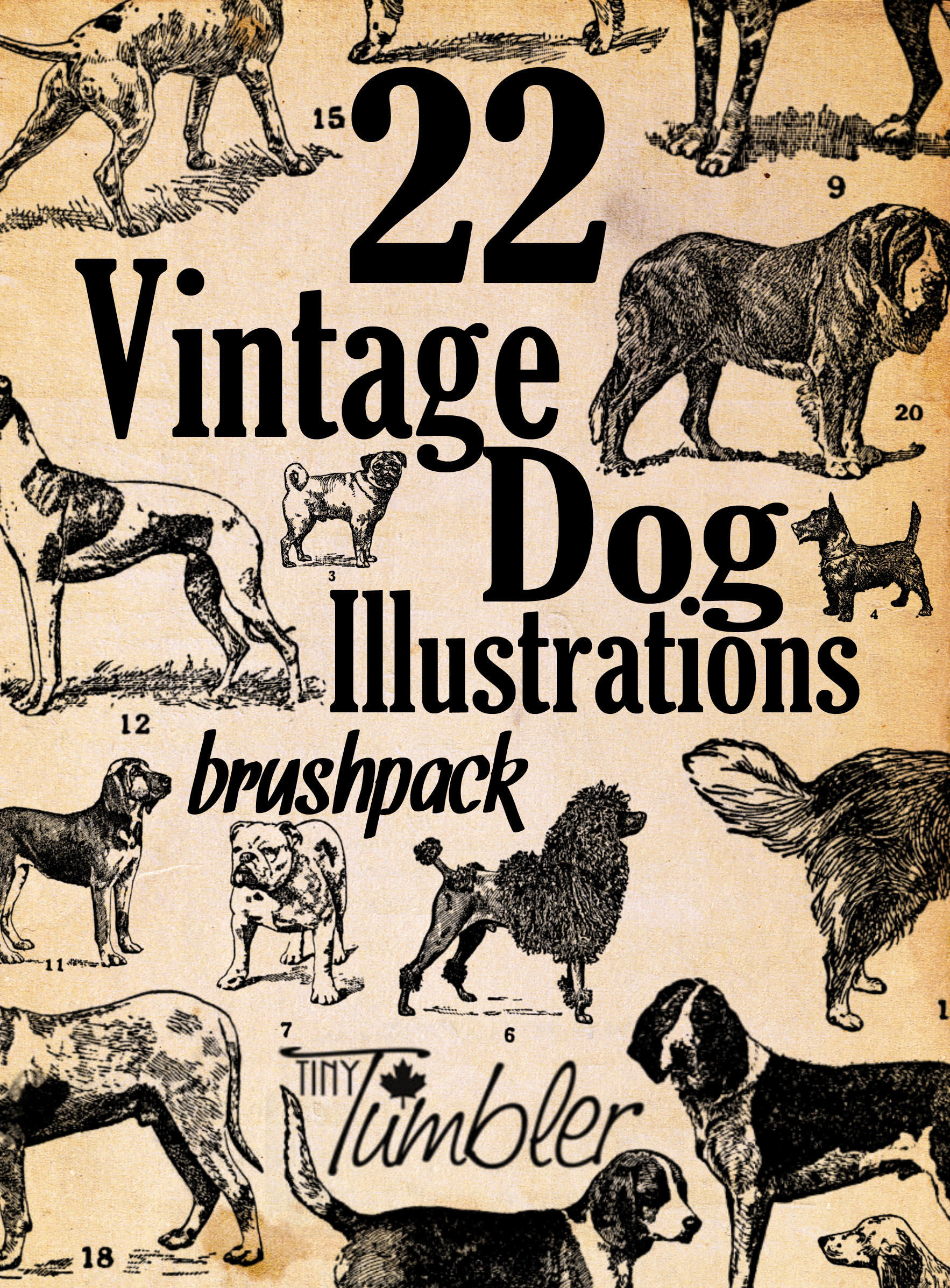 22 Vintage Dog Illustrations Brushpack by TinyTumbler