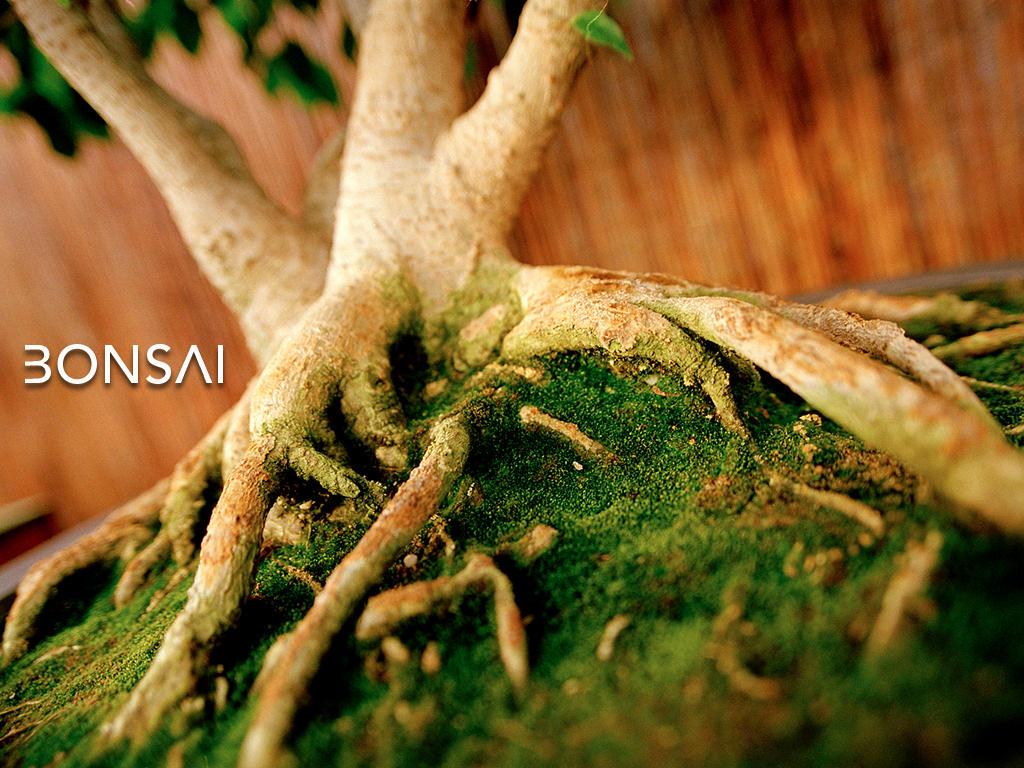 BONSAI by buddha1822