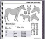 HARPG Character Sheet