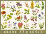 Flowers, Botanical - 1
