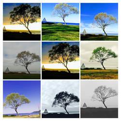 1 Tree ~ 1 Photo ~ 635 variations ~ 75 album